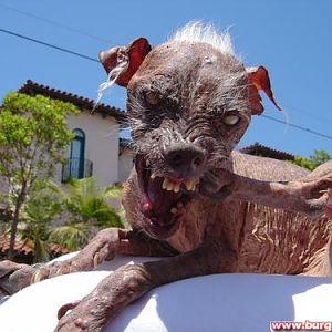Der hässlichste hund der welt ist tot