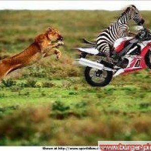 Wheely Zebra!!!